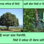sikhi tree 3